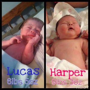 difference between Harper and Lucas
